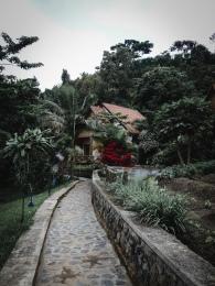 the little cabin in the lush garden