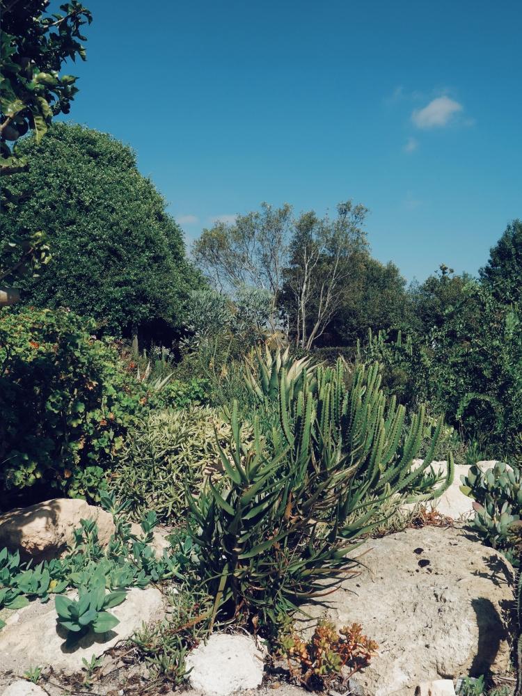 Le jardin semi-aride