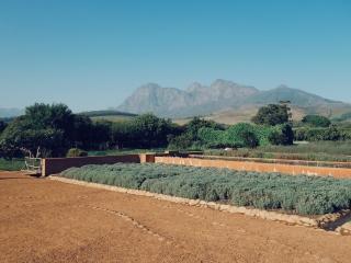 Les jardins de Babylonstoren