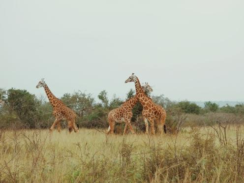 Akagera Rwanda
