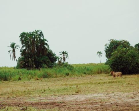 Akagera 2019